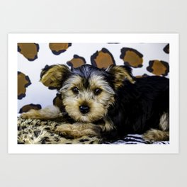 Yorkshire Terrier Puppy with Large Ears in front of a Leopard Print Background Art Print
