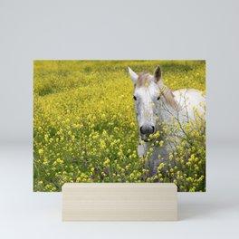 White Horse in a Yellow Pasture Mini Art Print
