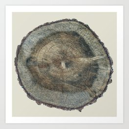 Stump Rings Art Print