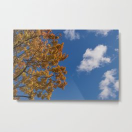Trees in the fall #montreal Metal Print