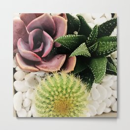Sultry Succulent Garden in Rose Pink and Green Metal Print