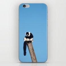Varecia Variegata III iPhone & iPod Skin