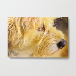 Doggy Metal Print