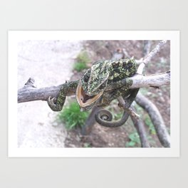 Colourful Chameleon Wrapped Around A Branch Art Print