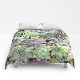 Desert Flower II Comforters
