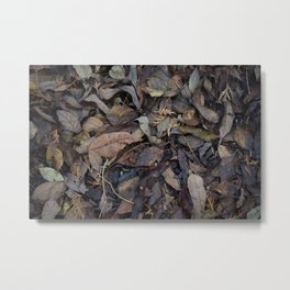 Autumn Leaves in Deep Forest Metal Print