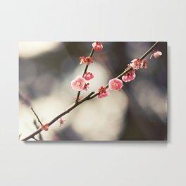 Blossoms Metal Print