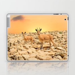 Ibexes and sunset Laptop & iPad Skin