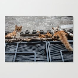 A Bunch of Cats Canvas Print