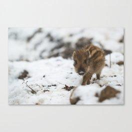 Cute wild boar piglet in the snow Canvas Print