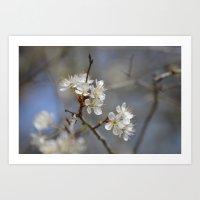 White Bloom Art Print