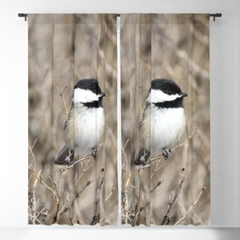 Feather weight Blackout Curtain
