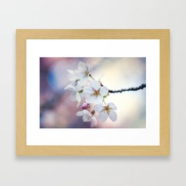 Japanese Cherry Framed Art Print