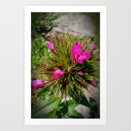 A prickly pink flower ball Art Print