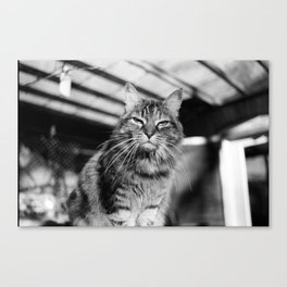 Bitchy Kitty Canvas Print