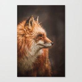Red Fox (Vulpes vulpes) Canvas Print