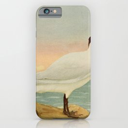 Vintage Print - Birds and Nature (1898) - Caspian Tern iPhone Case