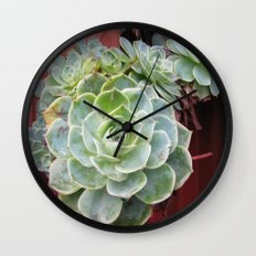 CANADA  - Succulents in Vancouver  Wall Clock