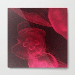 Pink Jelly Fish  Metal Print