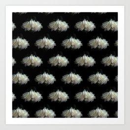 White Peonies on Black Art Print