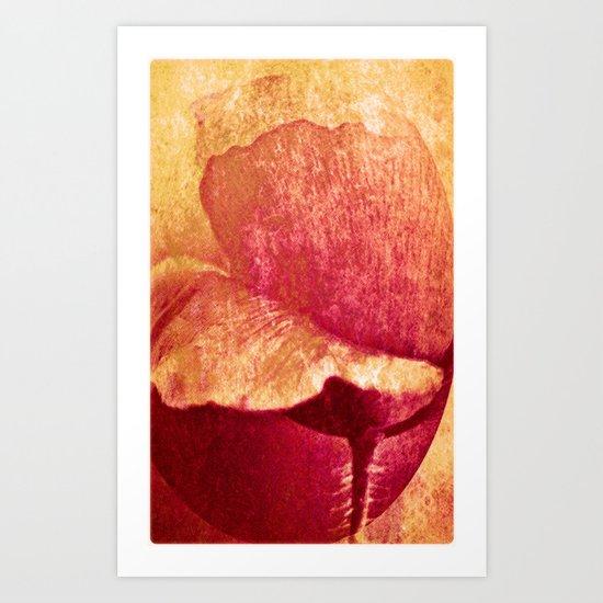 Poppy #II Art Print