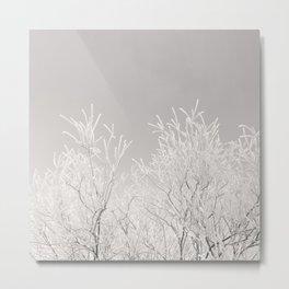 Winter brances Metal Print