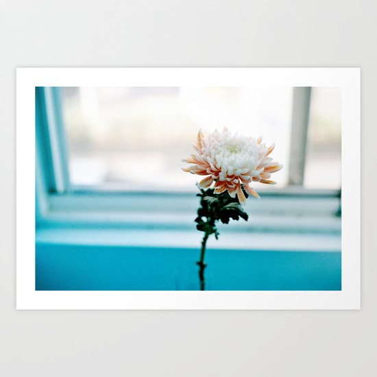 White and Pink Chrysanthemum Art Print