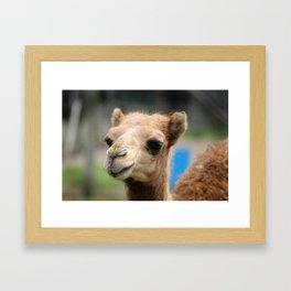 Baby Arabian Camel Framed Art Print