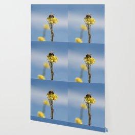 Honey bee on a wildflower Wallpaper