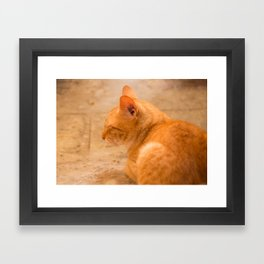 Orange Cat Is Resting On The Terrace  #decor #society6 #homedecor Framed Art Print