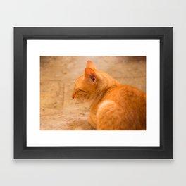 Orange Cat Is Resting On The Terrace  #decor #society6 #homedecor Framed Art Print