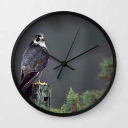 PEREGRINE FALCON ON POST Wall Clock