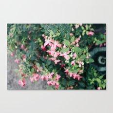 Small treasures Canvas Print