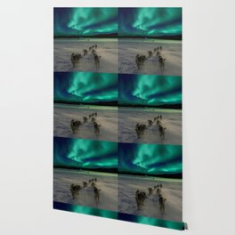 Winter Northern Lights Dog Sled (Color) Wallpaper