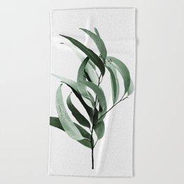 Eucalyptus - Australian gum tree Beach Towel