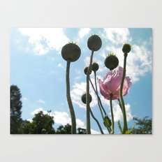 Poppies in the Sky Canvas Print