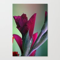 burgundy Canvas Prints featuring Burgundy by Whittle Photography