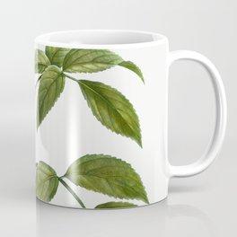 Elder (Sambucus nigra) from Traite des Arbres et Arbustes que lon cultive en France en pleine terre Coffee Mug