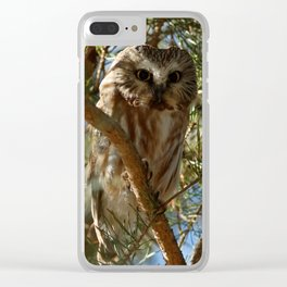 Perched Northern Saw-Whet Owl Clear iPhone Case