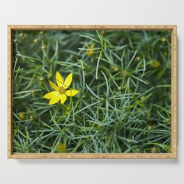 Coreopsis 5 Serving Tray