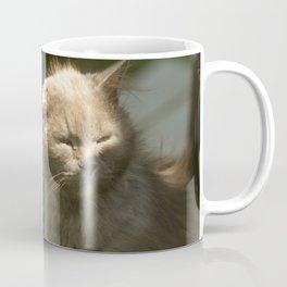 Gray cat walks on a green grass Coffee Mug