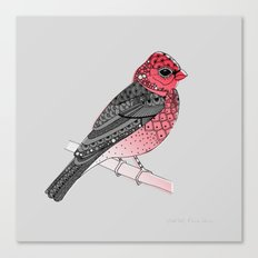 Scarlet Rosefinch Canvas Print