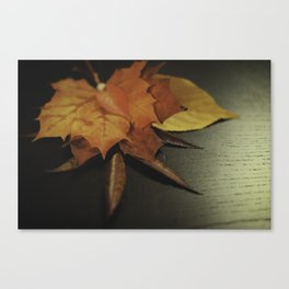 autumn arranged Canvas Print