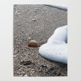 Shells and Sand Poster