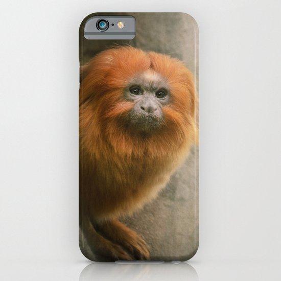 Little Golden Headed Lion Tamarin iPhone & iPod Case
