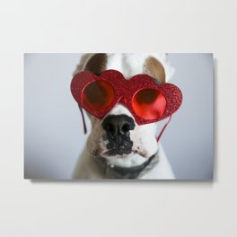 Boxer with love eyes 02 Metal Print