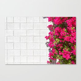 Bougainvilleas and White Brick Wall in Palm Springs, California Canvas Print