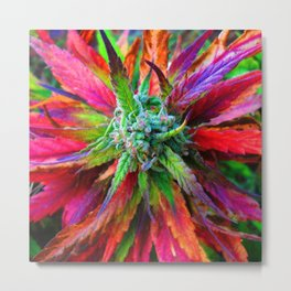 Sunny daze , high riders & rollers space catnip Metal Print