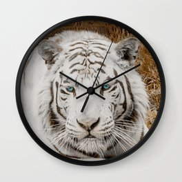 WHITE TIGER GAZE Wall Clock