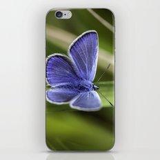 Beautiful Blue iPhone & iPod Skin